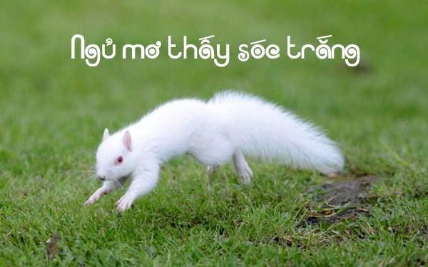 Ngủ mơ thấy con sóc trắng